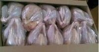 halal frozen whole chicken brazil (competitive price) for sale