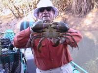 Live mud crab Exporters