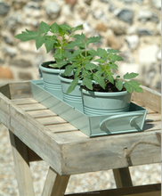 Zinc Planters on Tray.
