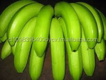 Tropical fresh banana for sale