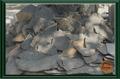 JAVA SLATES / cinza lava pedra cortada aleatório natural