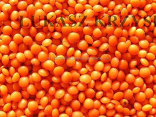 2015 new crop Turkish Red Lentils