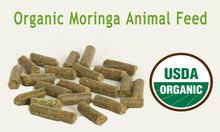 Herbal Poultry Feed for Animals