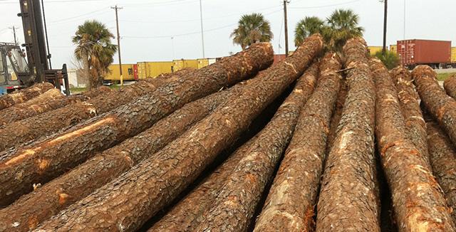 Sell Pine Wood Log Buy Sell Pine Wood Log Product On
