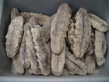 Dried Processed Sea Cucumber and Sea Horse 100% Top Quality