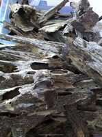 Agarwood price for high quality cultivated aquilaria crassna trees from VINABT Co., Ltd Vietnam