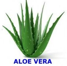 ALOE VERA,ALOE, Aloe vera ( Aloe Barbadensis)