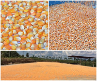 Wholesale Dreid Yellow Corn for animal feed