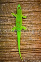 LIVE REPTILES, INSECTS, AMPHIBIANS AND BIRDS