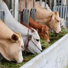 Feed Probiotic for Successful dairy Farming in Kenya