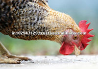 Probiotics for poultry feed