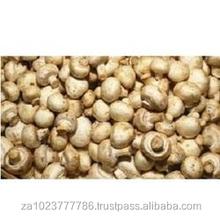 fresh mushrooms shiitake portobello oyster FRESH WHITE TRUFFLES/mushroom Grade AAA