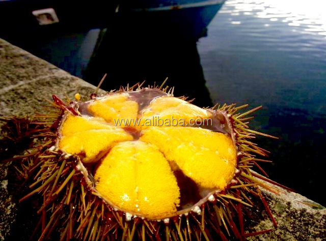 Fresh Sea Urchin.jpg