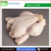 Halal Grade A Frozen Whole Chicken and Frozen Chicken Feet