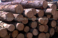 Southern Yellow Pine Logs , European Pine logs AND WHITE PINE LOGS