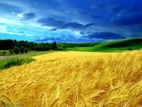 Ukrainian agricultural land