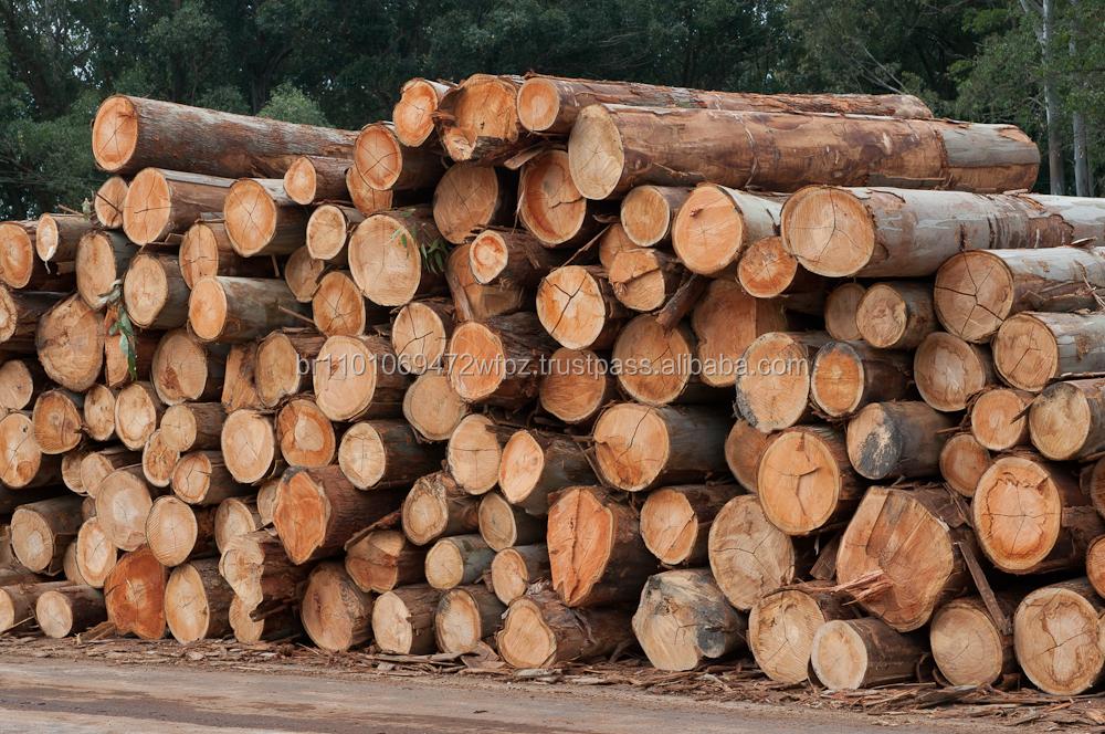 Eucalyptus Wood Logs Buy Logs Wood Logs Eucalyptus