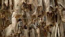 Teabag style dryed bonito powder pack dried stockfish