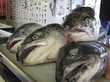 Frozen RIBBON FISH,HORSE MACKEREL and WHOLE SALMON