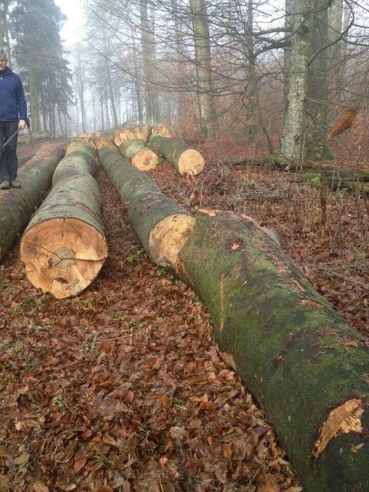 Германия бука пилинг журналы FSC дерево
