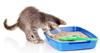 Antibacterial Zeolite Cat Litter