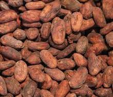 cocoa bean,coffe,kola,palm nuts,corn
