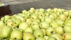 Golden Fresh Apples