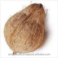 Coconut Suppliers from India