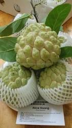 HOANG KIM VIETNAM 'S Custard Apple Fruit HOT FOR SALE