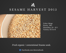 Natural White Sesame Seeds - Conventional or Organic USDA & EU Certified