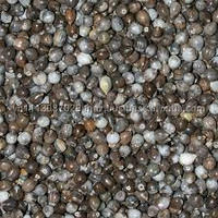 Natural coix seed with hight quality from Vietnam