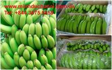 Hot sale 2015, the best fruit in Viet Nam - Cavendish banana / Standard: Green, sweet, 18-25 cm MDH 02 - 583