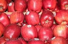 Fresh Fuji Apple New Crop South African Fresh Fuji Apple GRADE a FOR SALE Hot Sales