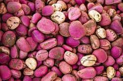 Top quality Kola nut extract, bitter cola nut extract, Caffeine powder 5%