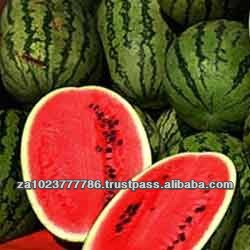 Fresh Fruit-Water Melon high quality VERY HIGH GRADE