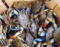 half cut blue swimming crab