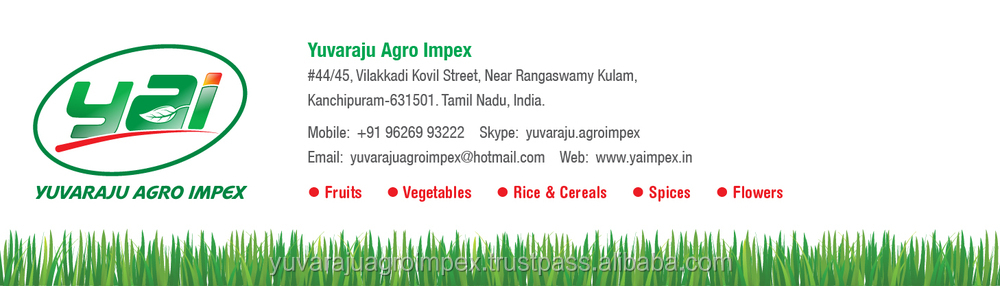 Fresh Guntur Lemon Supplier