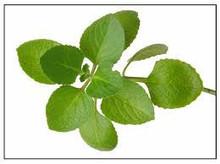 Oregano Aromatic Culinary Herb