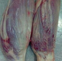 Frozen Beef Forequarter for sale