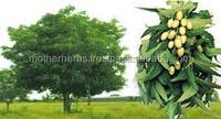 Herbal Neem pesticides