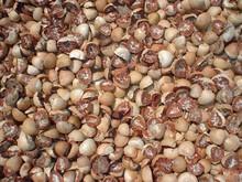 VIETNAM DRIED BETEL NUT, WHOLE/SPLIT BETEL NUT COMPETITIVE PRICE
