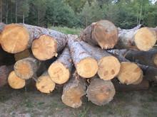 LOGS- White European Ash Veneer logs