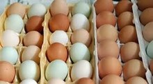 Barato granja venta al por mayor huevos frescos