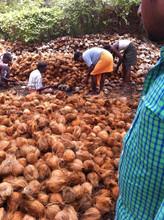 coconut buyers