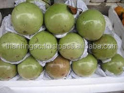 Supply Fresh Milk Apple (Star apple) from Vietnam with best price and high quality