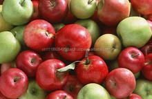 H_Fresh Fruit Cheapest Price Wholesale FRESH SPECIAL Apple From Vietnam