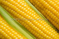 maize for animal feed