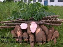 cassava powder/tapioca powder for human