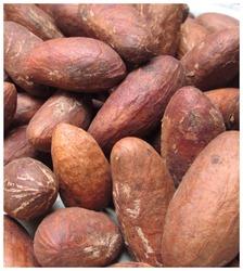 Bitter Kola Nut Extract
