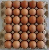 Pollo marrón huevos frescos venta